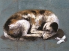 guia-en-reposo-oleo-sobre-lienzo-25-x-35-cms-2011